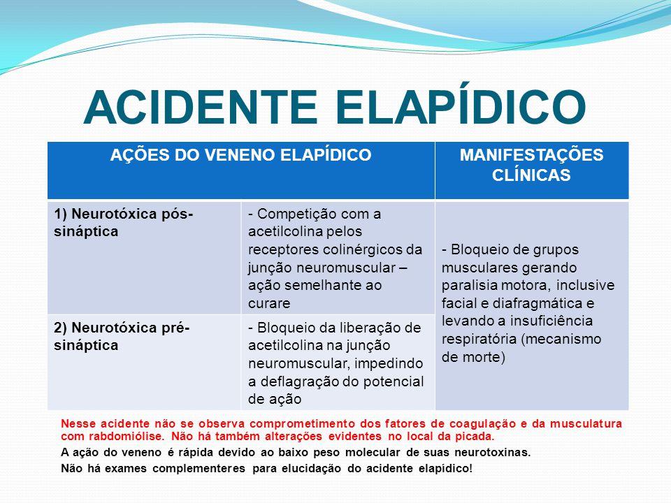 ACIDENTE ELAPÍDICO Nesse acidente não se observa comprometimento dos fatores de coagulação e da musculatura com rabdomiólise. Não há também alterações