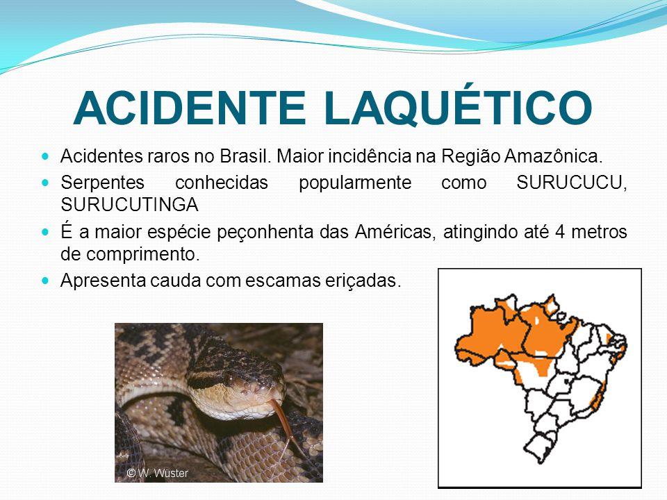 ACIDENTE LAQUÉTICO Acidentes raros no Brasil. Maior incidência na Região Amazônica. Serpentes conhecidas popularmente como SURUCUCU, SURUCUTINGA É a m