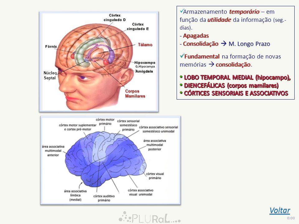 Núcleo Septal CorposMamilares Tálamo G.Hipocampa l Voltar 0:00