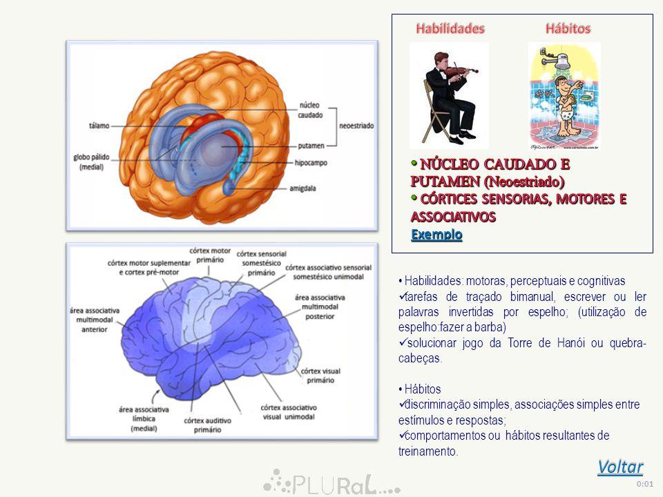 Voltar 0:01 Habilidades: motoras, perceptuais e cognitivas tarefas de traçado bimanual, escrever ou ler palavras invertidas por espelho; (utilização d