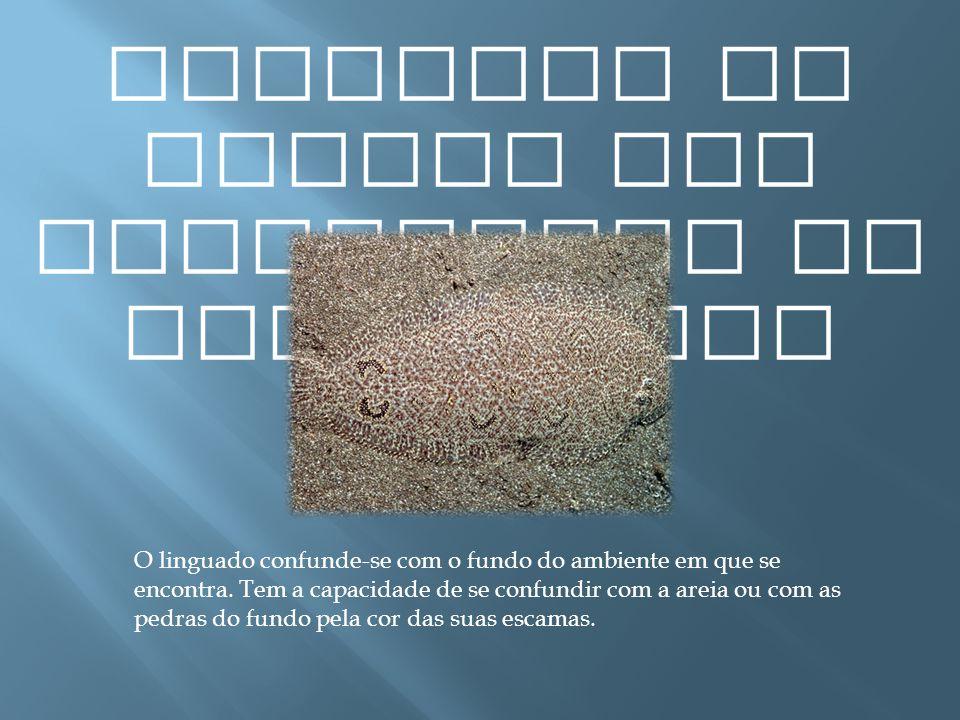 Exemplos de presas com capacidade de camuflagem O linguado confunde-se com o fundo do ambiente em que se encontra. Tem a capacidade de se confundir co