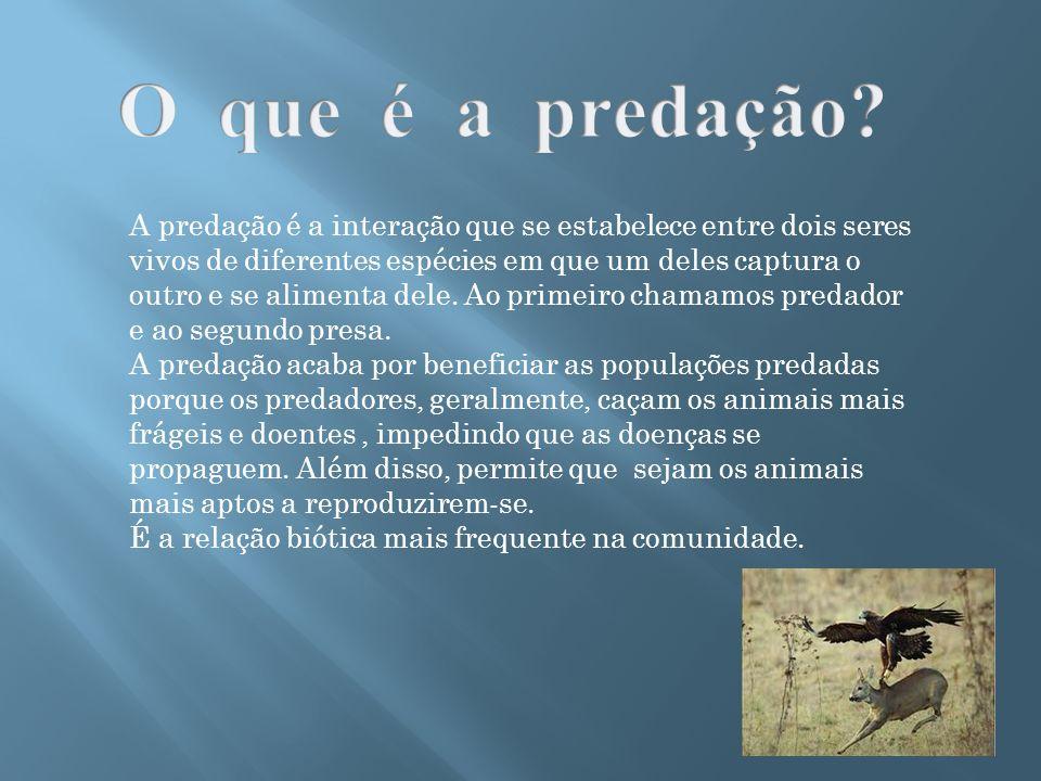 A predação é a interação que se estabelece entre dois seres vivos de diferentes espécies em que um deles captura o outro e se alimenta dele. Ao primei