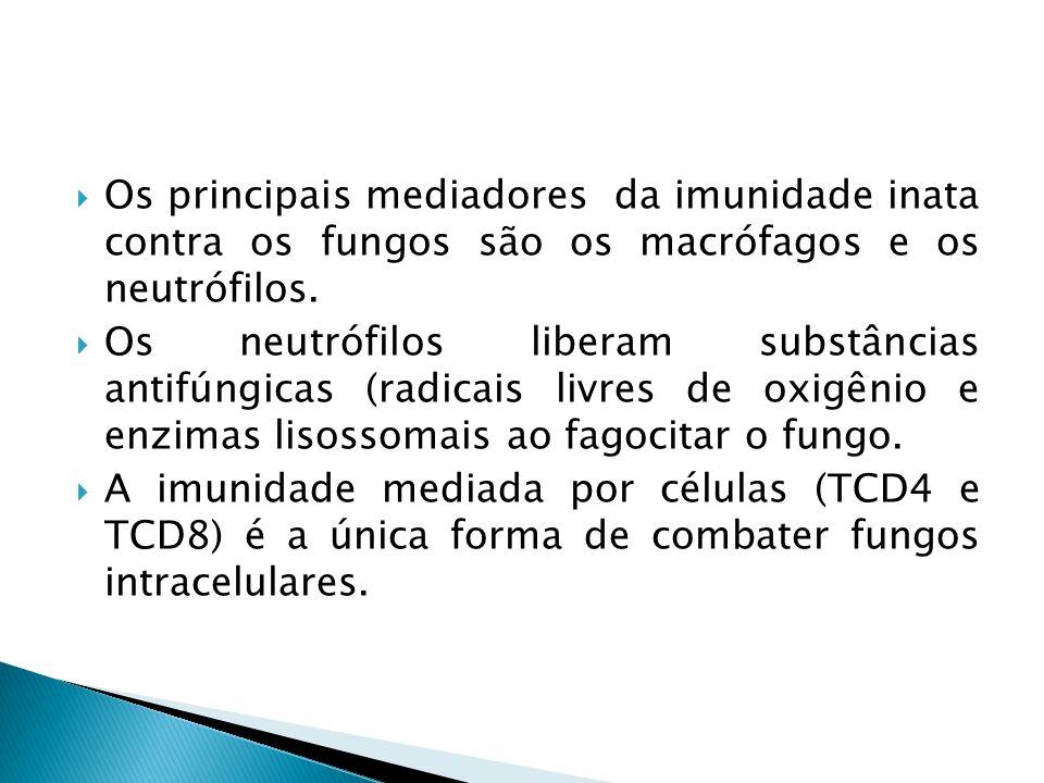 Os principais mediadores da imunidade inata contra os fungos são os macrófagos e os neutrófilos. Os neutrófilos liberam substâncias antifúngicas (radi