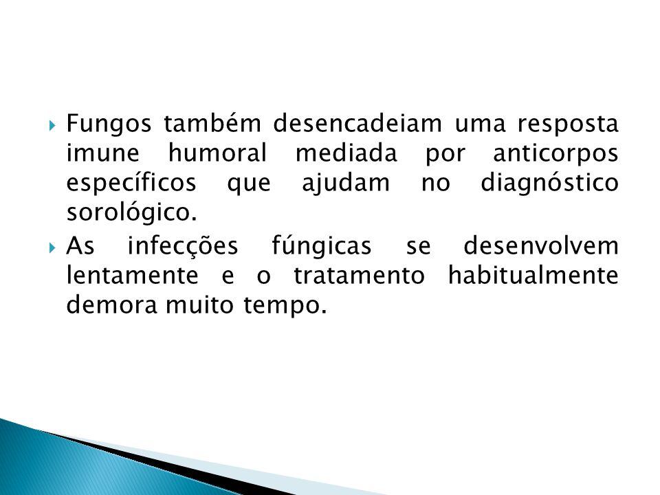 Fungos também desencadeiam uma resposta imune humoral mediada por anticorpos específicos que ajudam no diagnóstico sorológico. As infecções fúngicas s