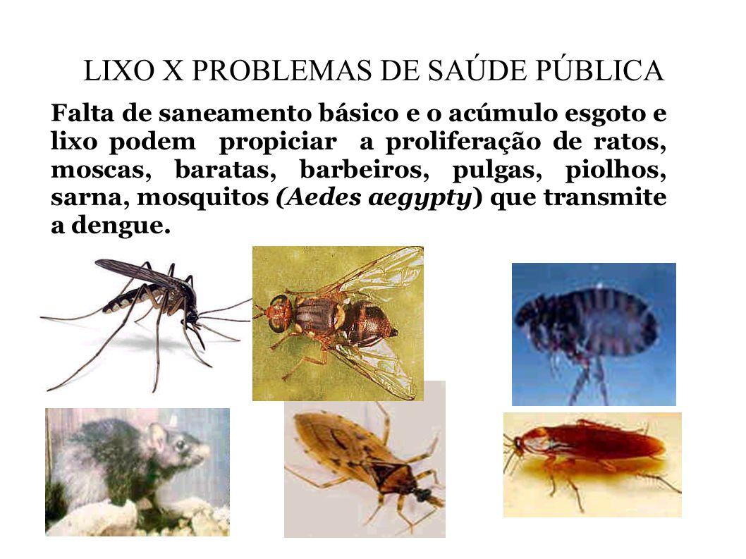 LIXO X PROBLEMAS DE SAÚDE PÚBLICA Falta de saneamento básico e o acúmulo esgoto e lixo podem propiciar a proliferação de ratos, moscas, baratas, barbe