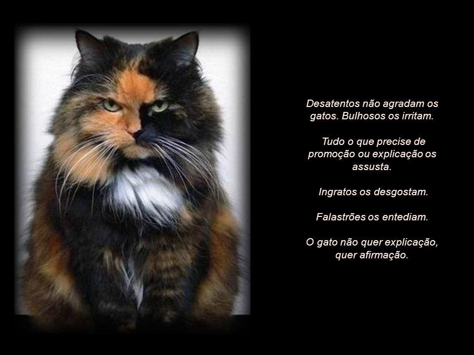 O gato é uma lição diária de afeto verdadeiro e fiel. Suas manifestações são íntimas e profundas. Exigem recolhimento, entrega, atenção