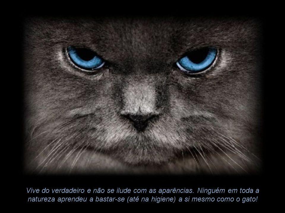 Desatentos não agradam os gatos. Bulhosos os irritam. Tudo o que precise de promoção ou explicação os assusta. Ingratos os desgostam. Falastrões os en