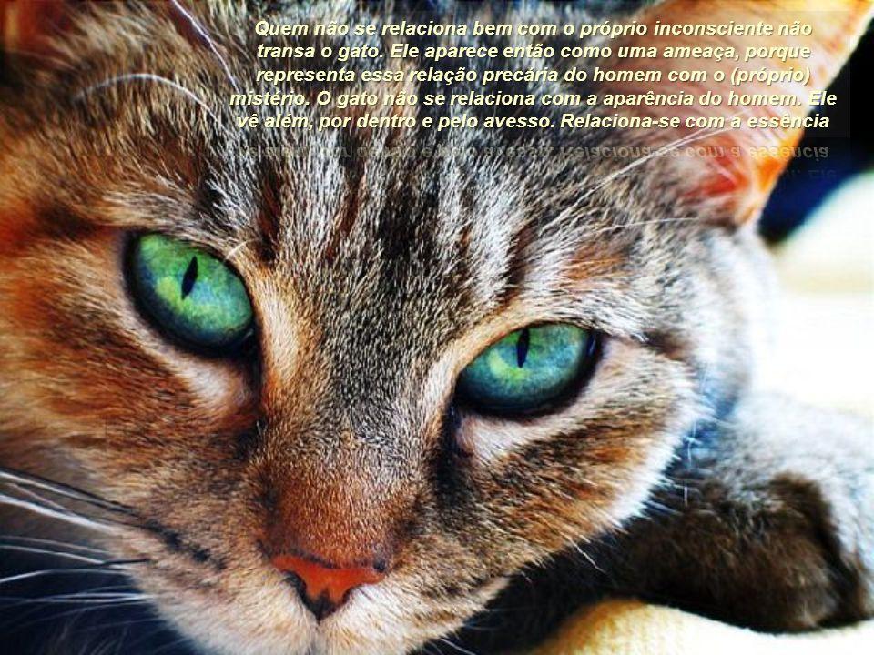 Sim, o gato não pede amor. Nem depende dele. Mas, quando o sente, é capaz de amar muito. Discretamente, porém, sem derramar-se. O gato é um italiano e