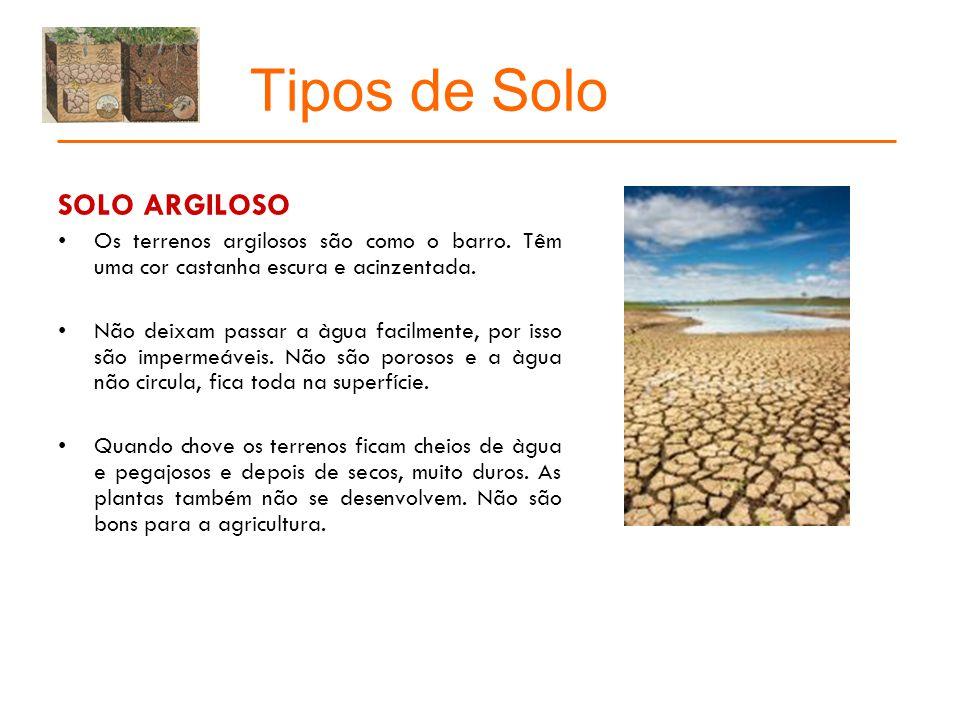 Tipos de Solo SOLO FERTIL Os terrenos férteis são próprios para a agricultura.