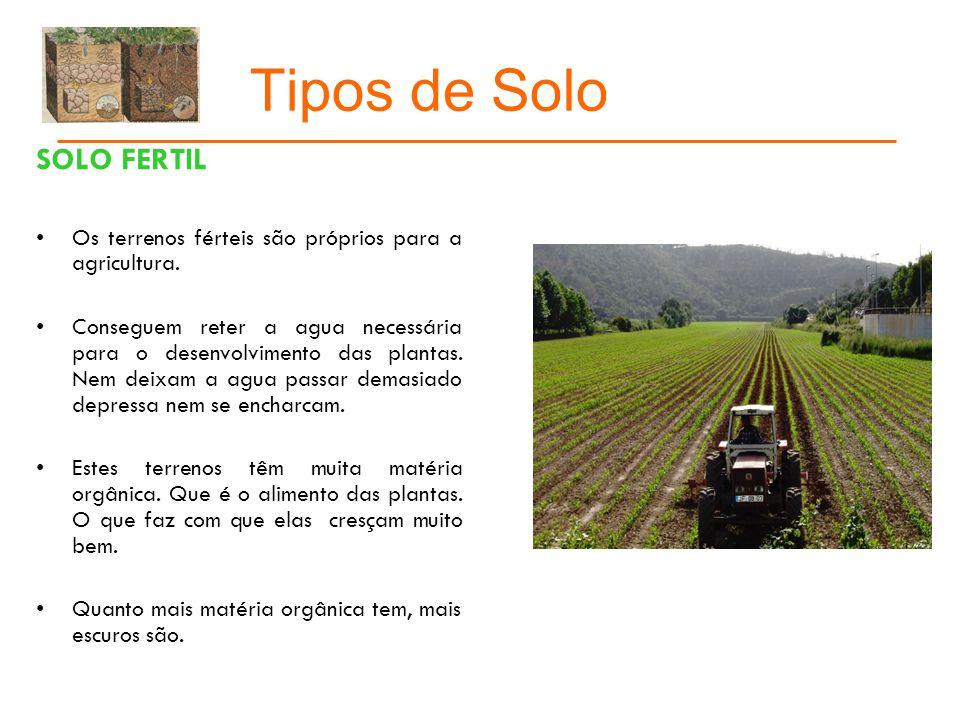 Tipos de Solo Conclusão O solo é a parte mais superficial da terra.