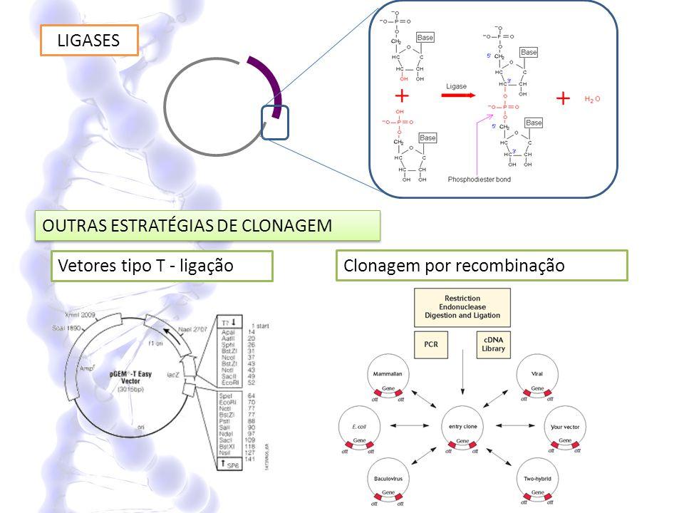 Replicação do DNA recombinante em células hospedeiras 4.