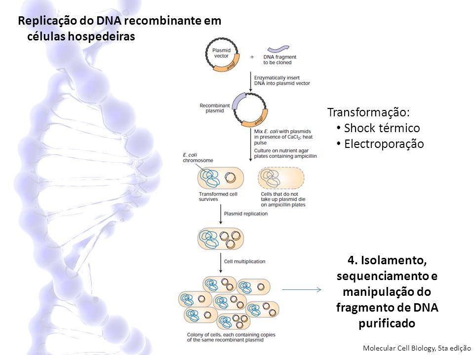 Replicação do DNA recombinante em células hospedeiras 4. Isolamento, sequenciamento e manipulação do fragmento de DNA purificado Transformação: Shock
