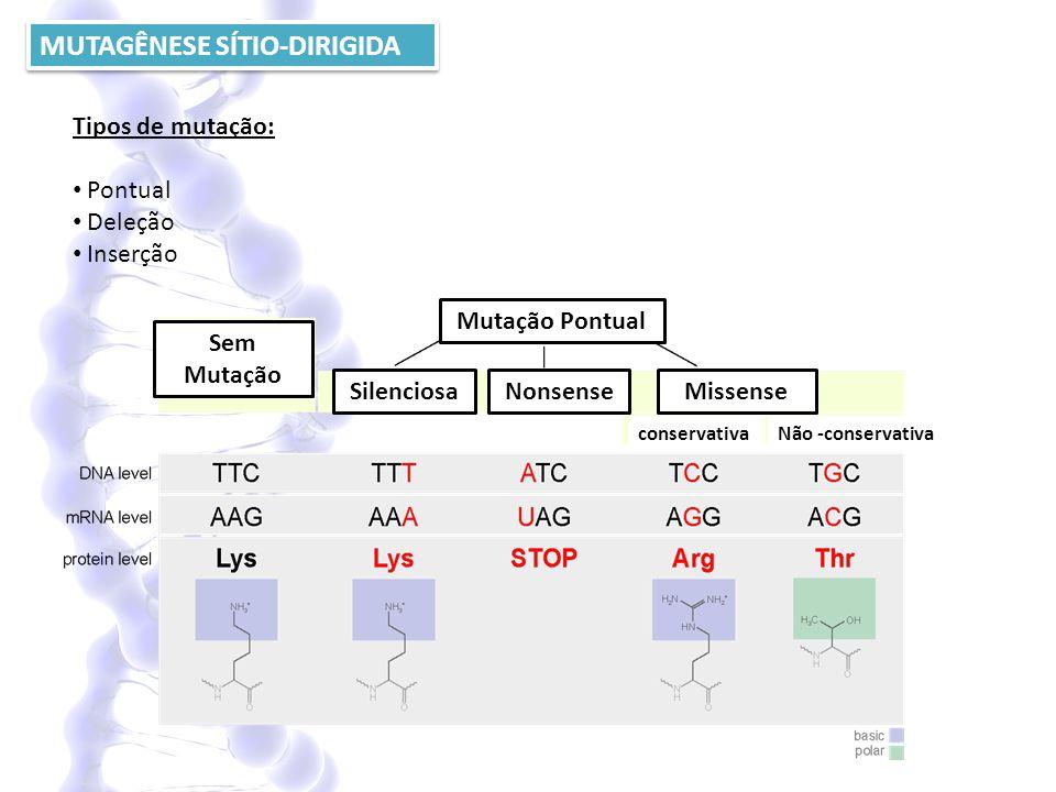 MUTAGÊNESE SÍTIO-DIRIGIDA Tipos de mutação: Pontual Deleção Inserção Mutação Pontual SilenciosaNonsenseMissense Sem Mutação conservativa Não -conserva