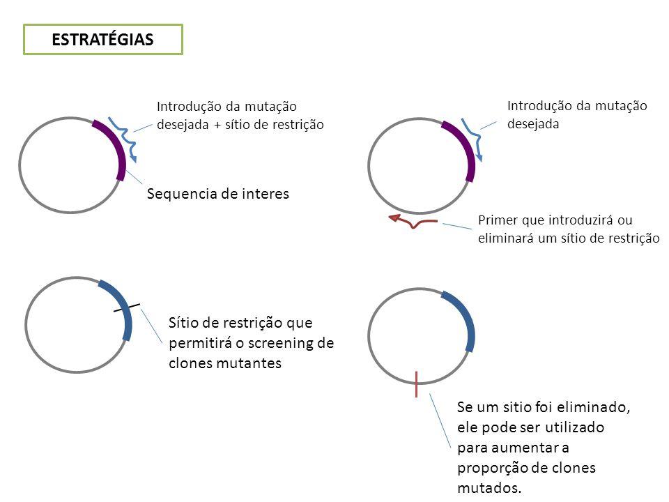 ESTRATÉGIAS Sequencia de interes Introdução da mutação desejada + sítio de restrição Sítio de restrição que permitirá o screening de clones mutantes I