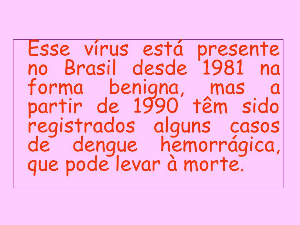 Esse vírus está presente no Brasil desde 1981 na forma benigna, mas a partir de 1990 têm sido registrados alguns casos de dengue hemorrágica, que pode levar à morte.