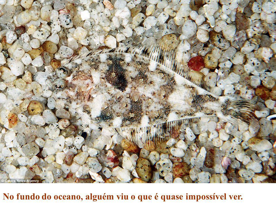 No fundo do oceano, alguém viu o que é quase impossível ver.