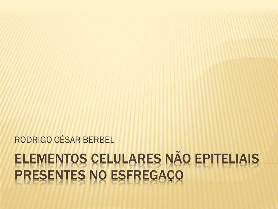 RODRIGO CÉSAR BERBEL