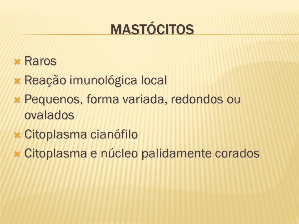 MASTÓCITOS Raros Raros Reação imunológica local Reação imunológica local Pequenos, forma variada, redondos ou ovalados Pequenos, forma variada, redondos ou ovalados Citoplasma cianófilo Citoplasma cianófilo Citoplasma e núcleo palidamente corados Citoplasma e núcleo palidamente corados