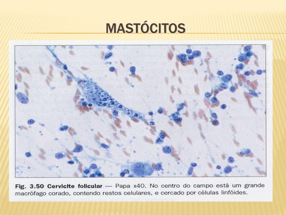 MASTÓCITOS
