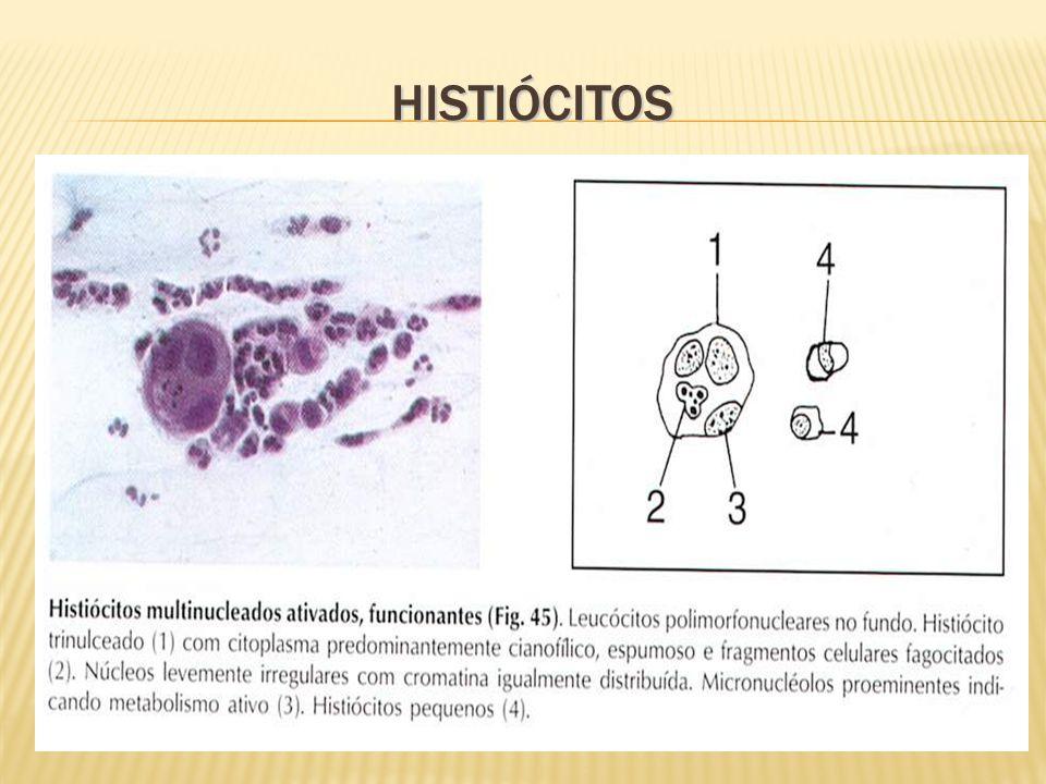 TROFOBLÁSTICAS Abortamento incompleto, deslocamento de placenta Abortamento incompleto, deslocamento de placenta Multinucleadas Multinucleadas Núcleos ativos, vacuolados com espessa membrana nuclear Núcleos ativos, vacuolados com espessa membrana nuclear Sinciciotrofoblasto: formação sincicial com núcleo central Sinciciotrofoblasto: formação sincicial com núcleo central Citotrofoblasto: célula do feto Citotrofoblasto: célula do feto