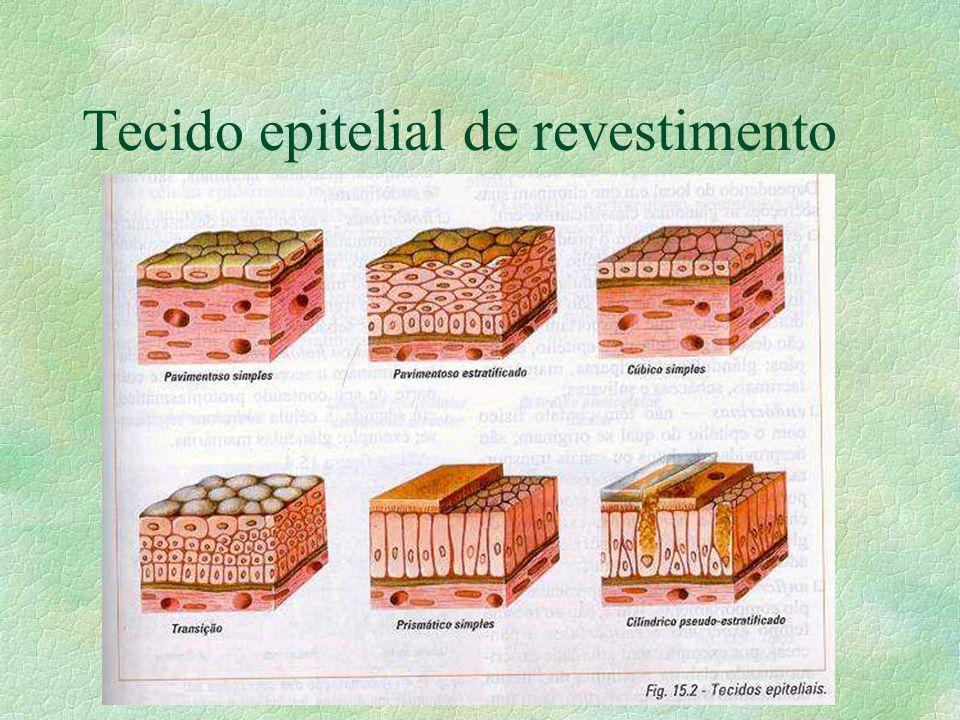 Tipos de tecido Epitelial O tecido epitelial é dividido em: -Tecido epitelial de revestimento (revestimento) -Tecido epitelial glandular (secreção)