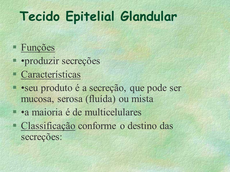 Epitélio de Revestimento Epitélio Pseudoestratificado Ciliado (Número) (Especialização) Faixa de citoplasma superficial Cílios não ocorrem em epitélio