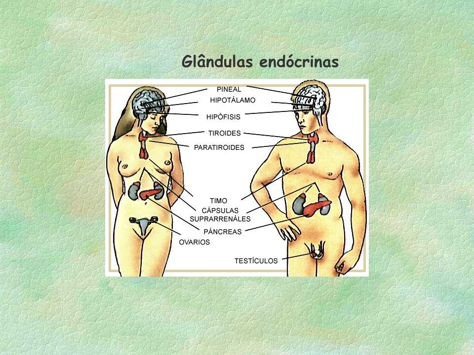 Tipos de Glândulas(gls ) Glândula exócrina : lança sua secreção para fora dos vasos sanguíneos. Ex: gls mamária, salivar, sebáceas, sudoríparas,lacrim