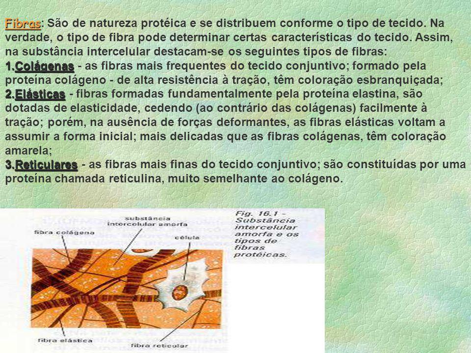Mastócito Fibroblasto Fibra elástica Fibra reticular Macrófago Fibra nervosa Linfócito Fibra colágena Neutrófilo Plasmócito S.F.A. Célula adiposaVaso