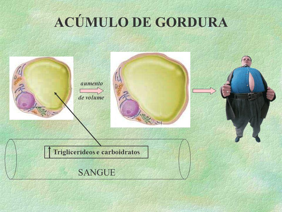 TECIDO ADIPOSO (GORDURA AMARELA)