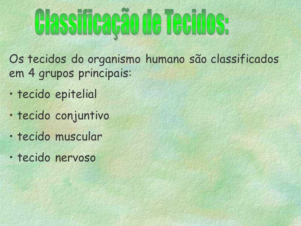 Histologia §Tecido §Diferenciação celular §4 tipos