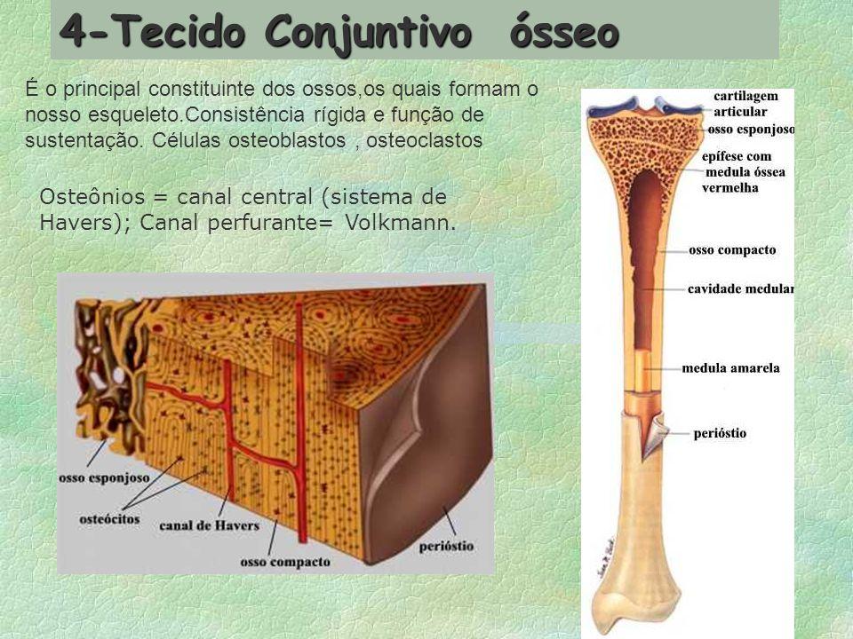 Sua principal função é a de dar sustentação ao nosso corpo e proteger certos órgãos internos.