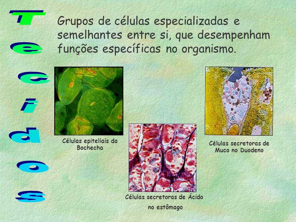Especializações do tecido Epitelial Camada de queratina : impermeabilização (pele); Microvilosidade : absorção (intestino); Muco e cílios : retenção e