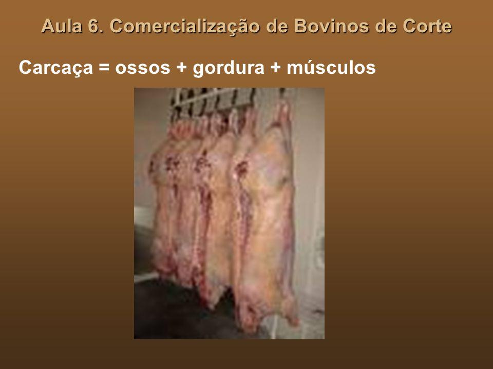 Aula 6. Comercialização de Bovinos de Corte Carcaça = ossos + gordura + músculos