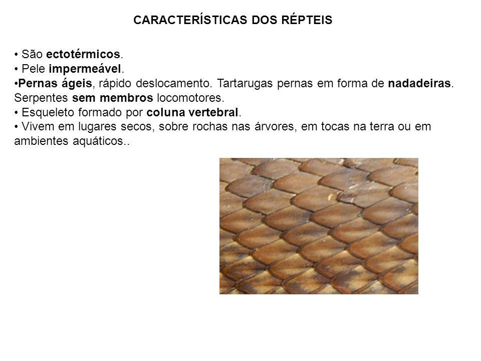 CARACTERÍSTICAS DOS RÉPTEIS São ectotérmicos. Pele impermeável. Pernas ágeis, rápido deslocamento. Tartarugas pernas em forma de nadadeiras. Serpentes