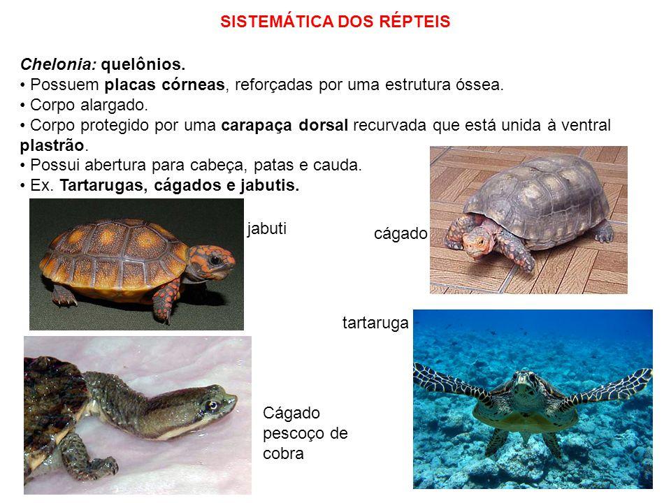 Reprodução Dos Repteis Sistemática Dos Répteis