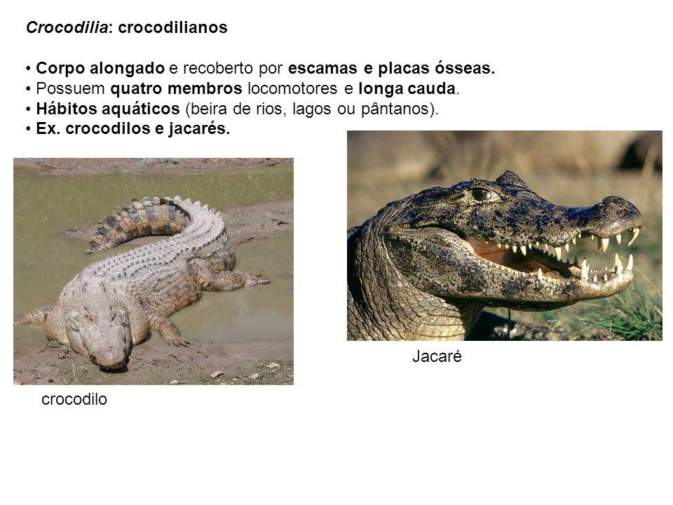 Crocodilia: crocodilianos Corpo alongado e recoberto por escamas e placas ósseas. Possuem quatro membros locomotores e longa cauda. Hábitos aquáticos
