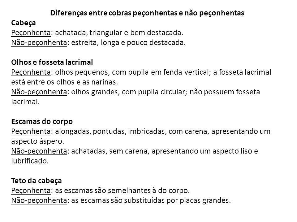 Diferenças entre cobras peçonhentas e não peçonhentas Cabeça Peçonhenta: achatada, triangular e bem destacada. Não-peçonhenta: estreita, longa e pouco