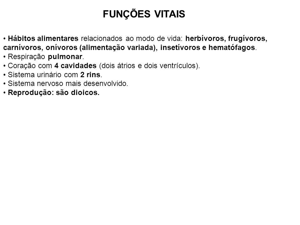 FUNÇÕES VITAIS Hábitos alimentares relacionados ao modo de vida: herbívoros, frugívoros, carnívoros, onívoros (alimentação variada), insetívoros e hem