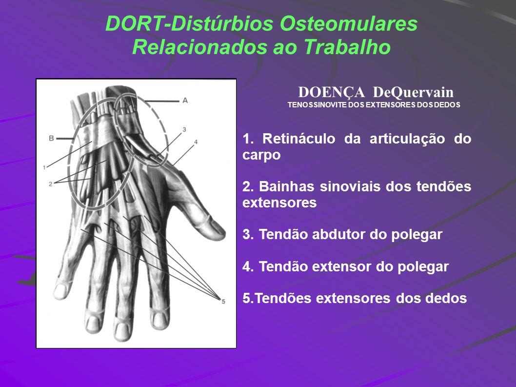 DORT-Distúrbios Osteomulares Relacionados ao Trabalho 1. Retináculo da articulação do carpo 2. Bainhas sinoviais dos tendões extensores 3. Tendão abdu