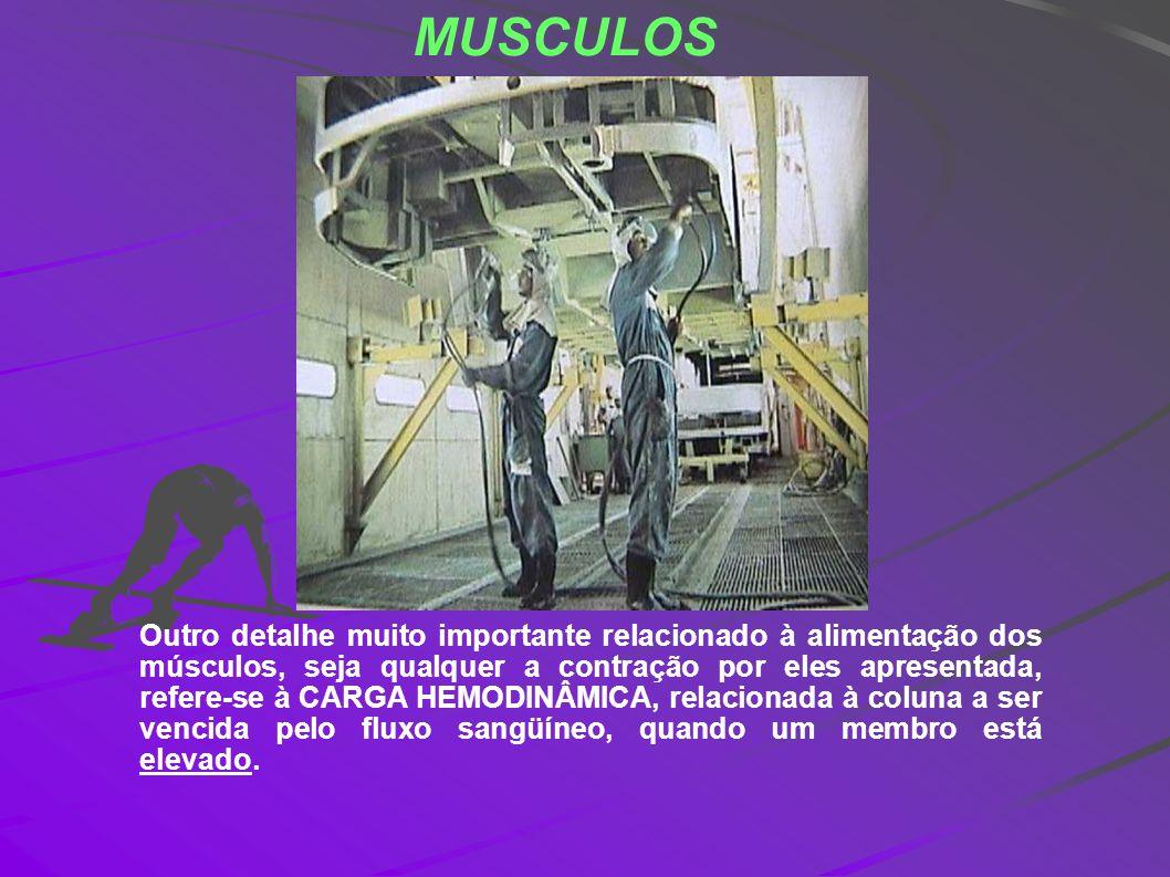 MUSCULOS Outro detalhe muito importante relacionado à alimentação dos músculos, seja qualquer a contração por eles apresentada, refere-se à CARGA HEMO