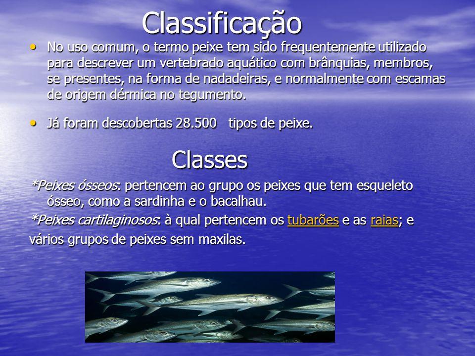 Classificação Classificação No uso comum, o termo peixe tem sido frequentemente utilizado para descrever um vertebrado aquático com brânquias, membros, se presentes, na forma de nadadeiras, e normalmente com escamas de origem dérmica no tegumento.