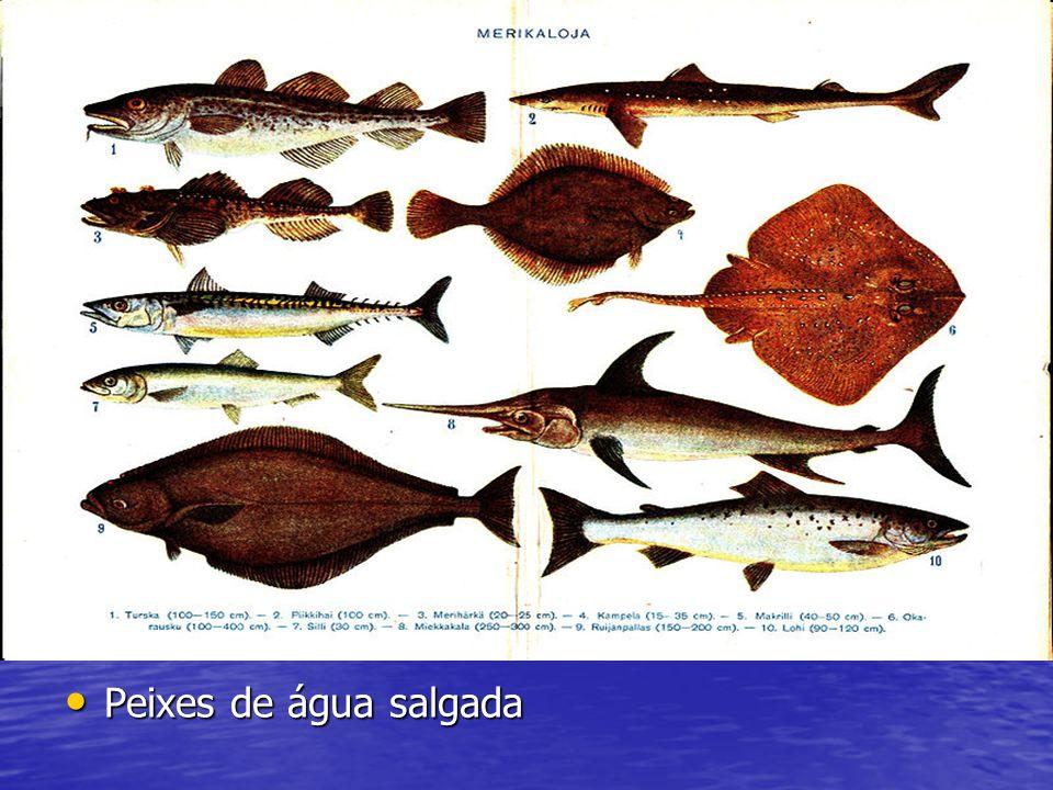Peixes de água salgada Peixes de água salgada Peixes de água salgada