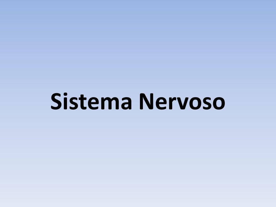 O neurônio Recebe, processa e envia informações Linguagem elétrica Após o nascimento geralmente não são produzidos novos neurônios – aqueles que morrem não serão substituídos.