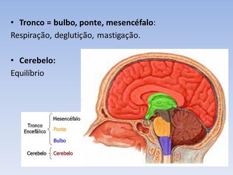 Diencéfalo: -Tálamo: funções sensitivas (todos os impulsos sensitivos passam por ele), motricidade, comportamento emocional