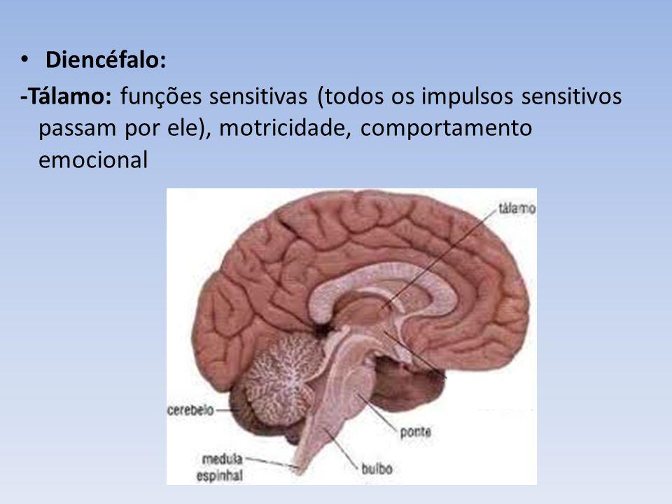 Diencéfalo: -Hipotálamo: controle do SNA, regulação da temperatura, do sono e vigília, da fome e saciedade, da sede e diurese, do comportamento emocional, do sistema endócrino.