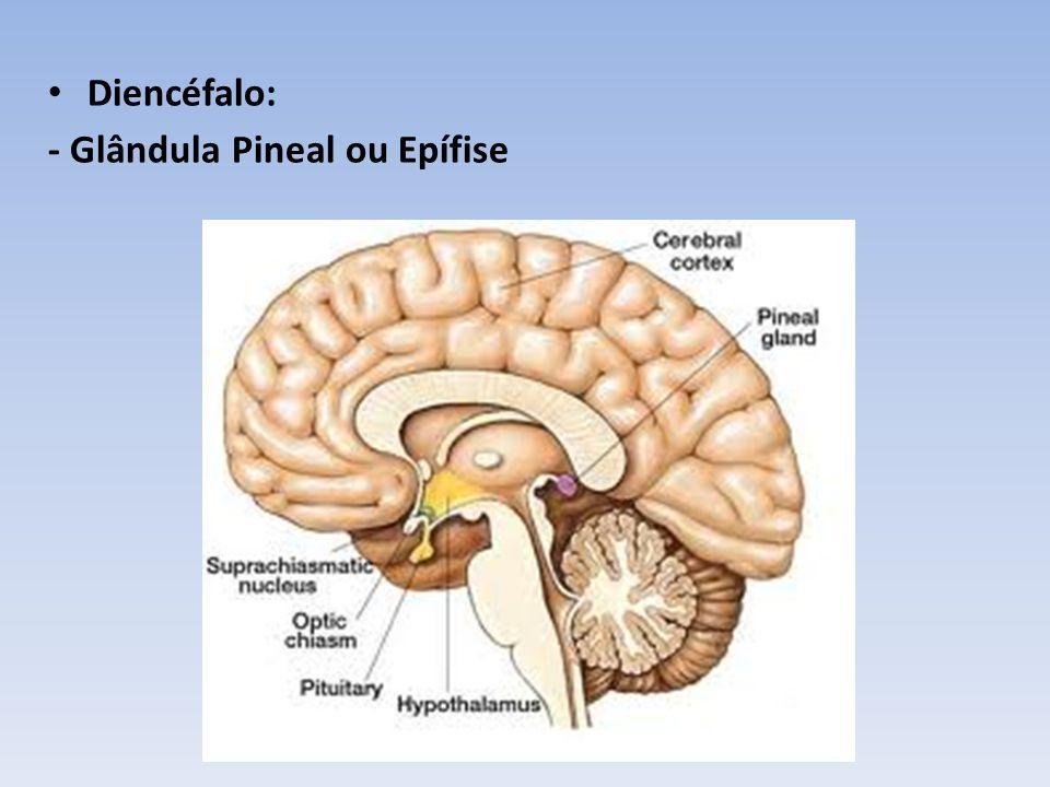 Hemisférios cerebrais: Substância cinzenta: corpos celulares dos neurônios Substância branca: axônios