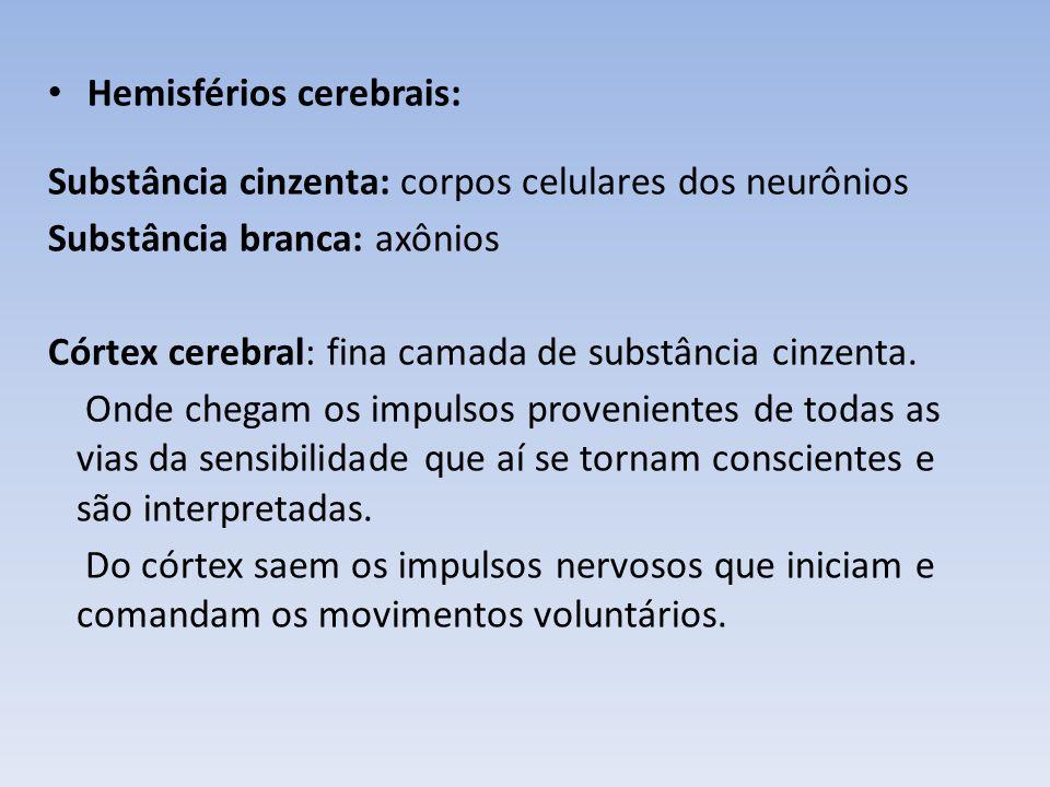 Hemisférios cerebrais: Lobos : divisão pela localização, não pela função.