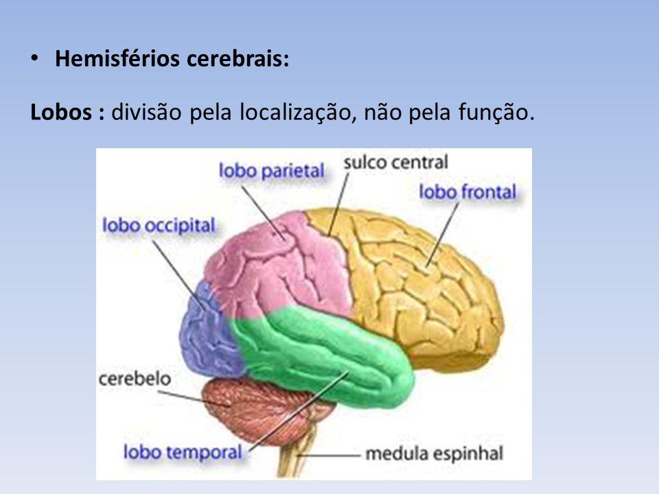 Frontal : área motora principal, fala, concentração, raciocínio, planejamento, comportamento emocional, comportamento social Parietal: importante área sensitiva, linguagem - compreensão Temporal: audição, olfato, compreensão, comportamento emocional, controle SNA Occipital: visão
