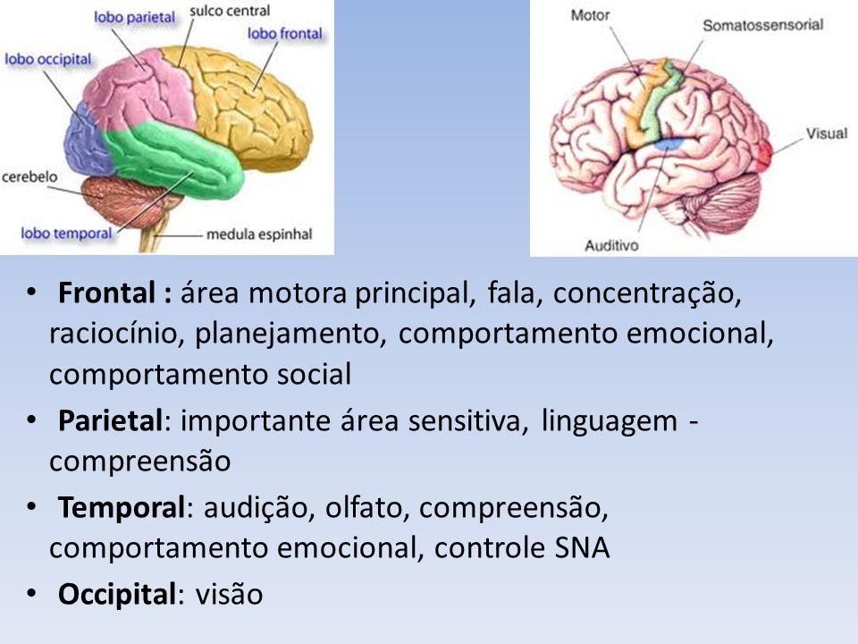 Sistema Límbico Comportamento emocional, motivação e controle SNA.