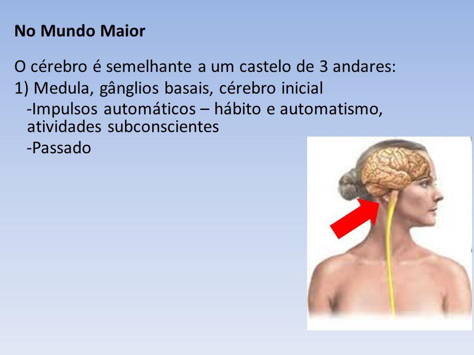 No Mundo Maior O cérebro é semelhante a um castelo de 3 andares: 1) Medula, gânglios basais, cérebro inicial -Impulsos automáticos – hábito e automatismo, atividades subconscientes -Passado 2) Córtex motor (do córtex motor até a extremidade da medula espinhal) -Energias motoras, esforço e vontade -Presente